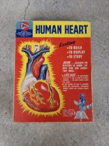 1950'S Pyro HUMAN HEART Model Kit Life Size Medical Toy 心臓 プラモデル 箱付き ブックレット付き Anatomica 解剖図 アナトミカル モダンアート デザイン アンティーク ビンテージ